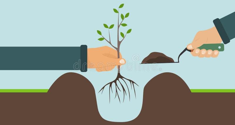 Piantatura dell'albero con le radici, una mano che tiene un albero, un'altra pala con suolo immagini stock