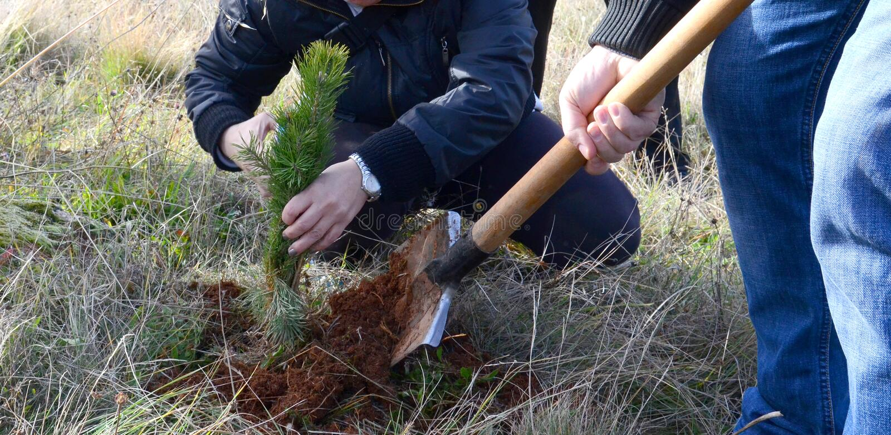 Piantatura dell'albero nuovo immagine stock libera da diritti