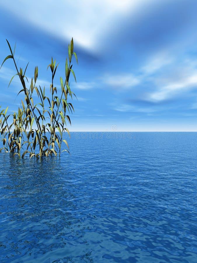 Piante acquatiche illustrazione vettoriale