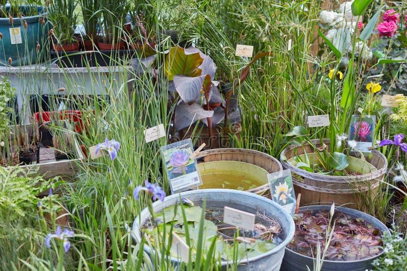 Piante Acquatiche Vendita : Piante acquatiche dello stagno sulla vendita durante la