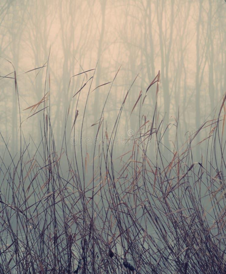 Piante acquatiche nel giorno nebbioso di autunno fotografia stock