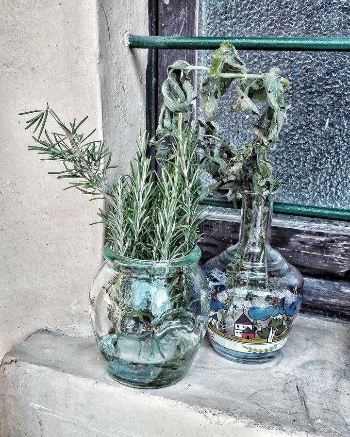 Piante aromatiche fotografie stock libere da diritti