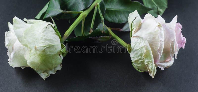 Piante belle con i fiori fragranti come dell'interno fotografia stock