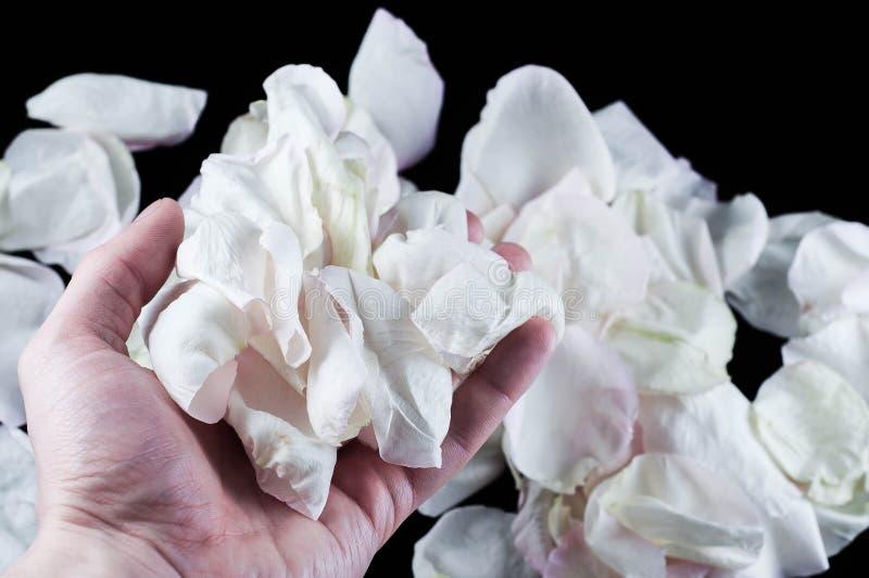 Piante belle con i fiori fragranti come dell'interno immagini stock