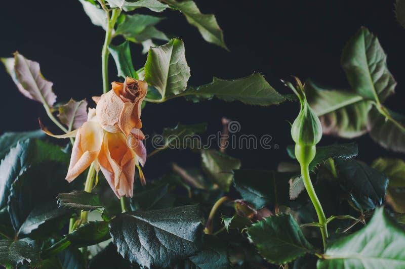 Piante belle con i fiori fragranti come dell'interno fotografie stock libere da diritti