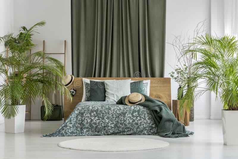 Piante in camera da letto verde oliva fotografia stock libera da diritti
