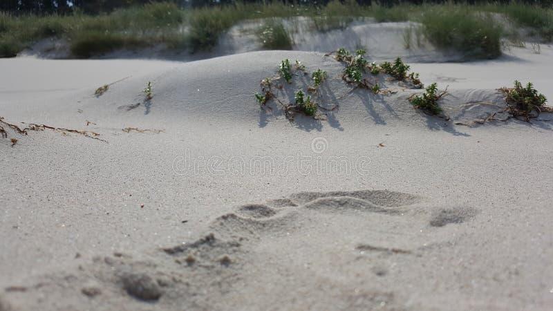 Piante che crescono nella sabbia contro lo sfondo delle nuvole immagine stock libera da diritti