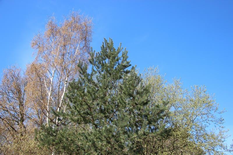 Piante che germogliano le giovani foglie verdi in primavera Albero differente fotografia stock libera da diritti