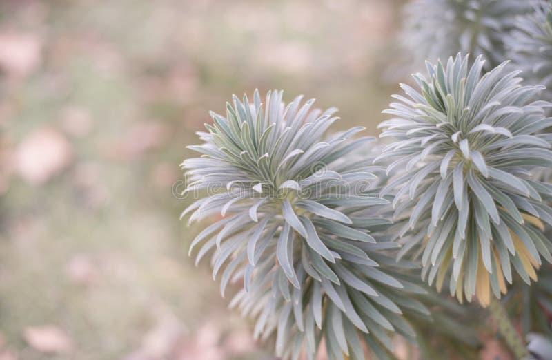 Piante con abbondanza delle foglie con bokeh immagine stock libera da diritti