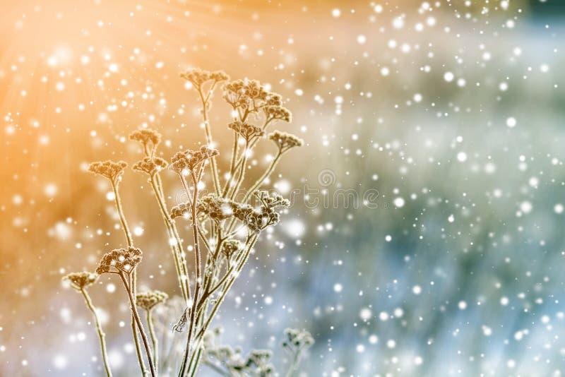 Piante congelate nella fine di primo mattino su nell'inverno fotografia stock