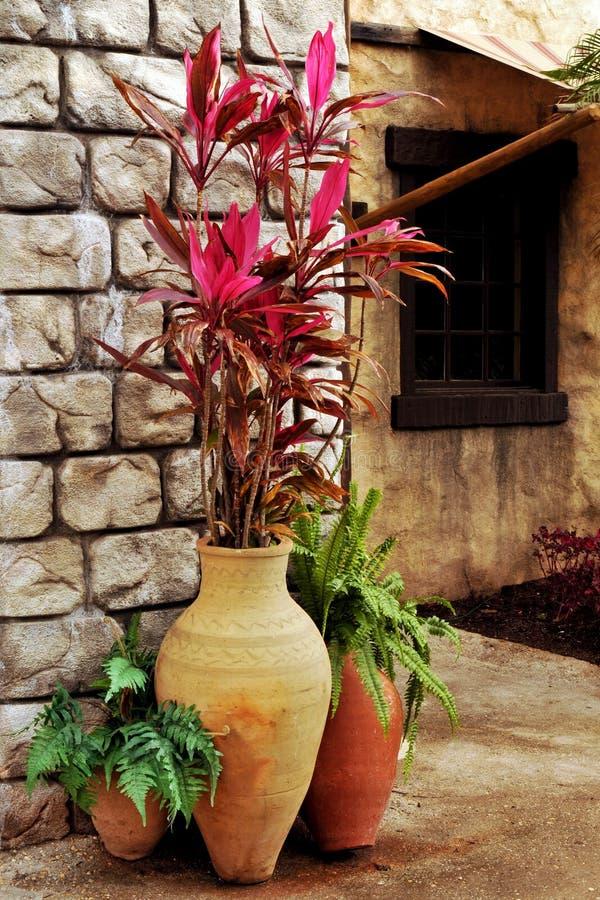 Piante conservate in vaso fotografia stock