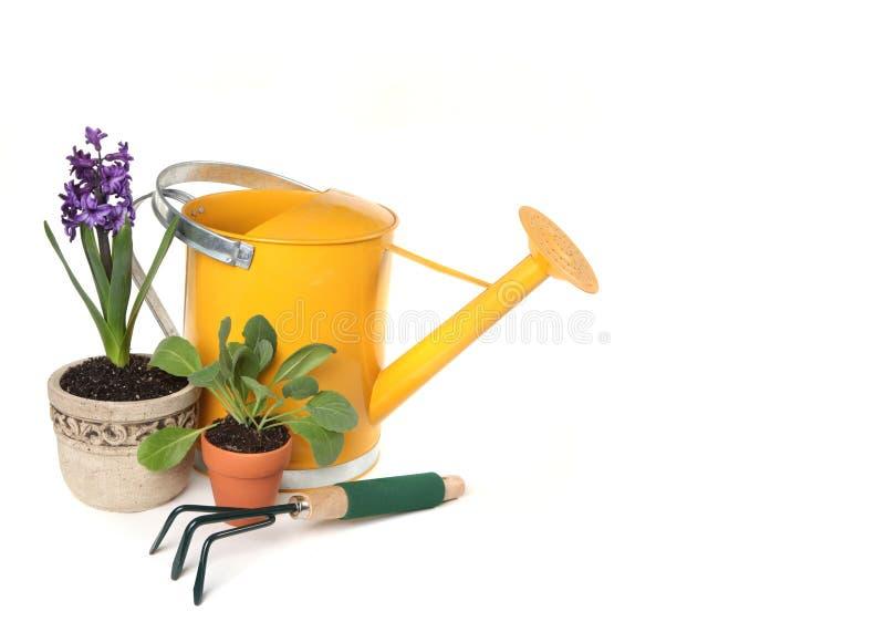 Piante conservate in vaso fresche di primavera con Waterin giallo immagine stock