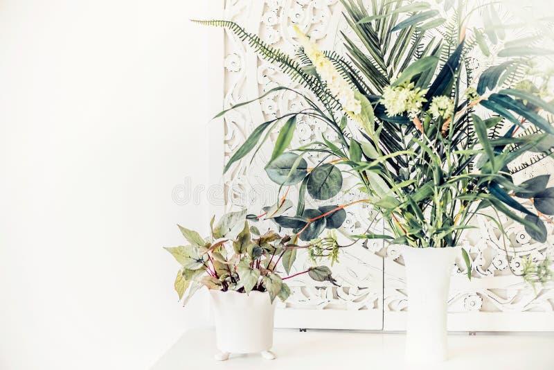 Piante d'appartamento abbastanza sulla tavola bianca, interno della casa immagini stock