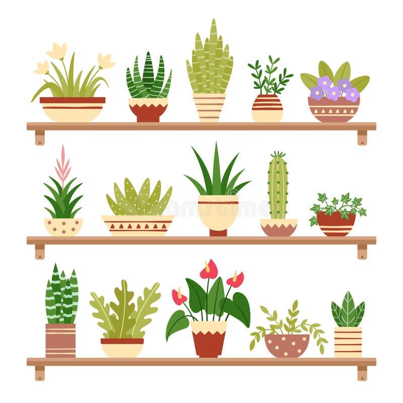 Piante da appartamento sullo scaffale Fiore in vaso, pianta da appartamento conservata in vaso e vasi della pianta Piante domesti royalty illustrazione gratis