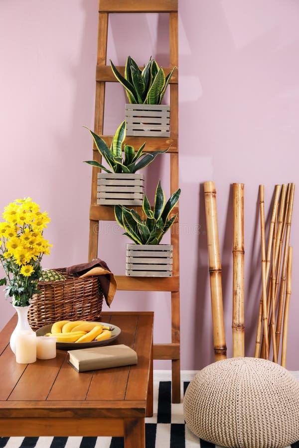 Piante decorative di sansevieria nell'interno di stanza immagini stock libere da diritti