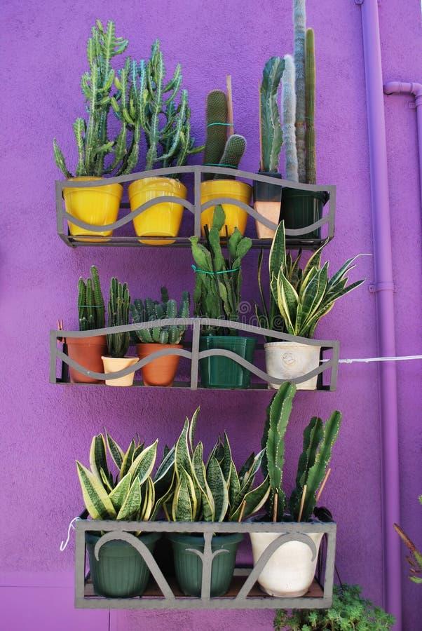 Piante Dei Succulents Immagine Stock