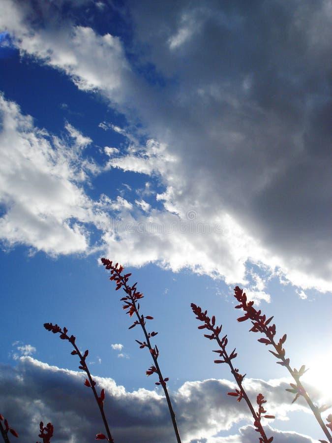 Piante del deserto contro il cielo nuvoloso fotografia stock libera da diritti