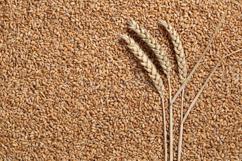 Piante del grano sull'argomento del grano di semi fotografia stock libera da diritti