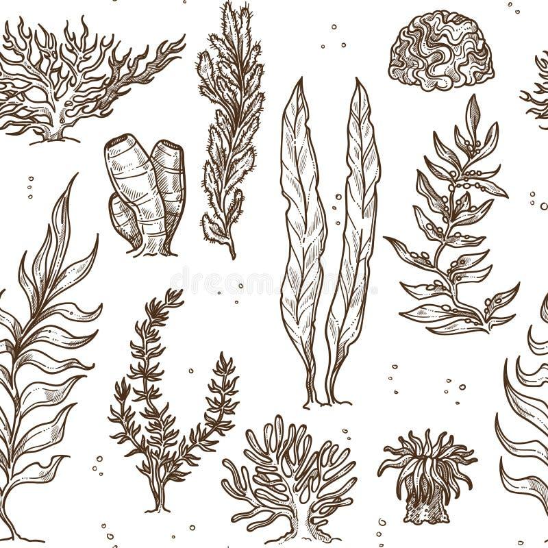 Piante dell'alga e coralli o spugne subacquei illustrazione di stock