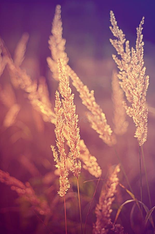 Piante dell'annata di autunno fotografia stock