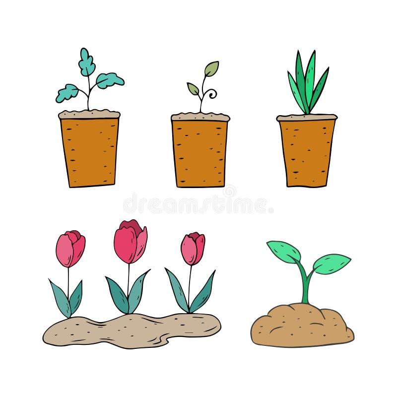 Piante della primavera in vasi su un fondo bianco illustrazione di stock