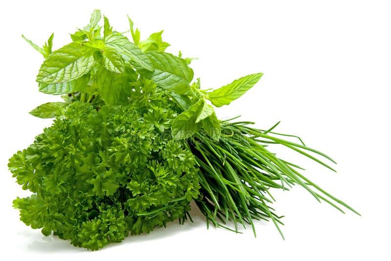 Piante delle erbe fresche immagini stock libere da diritti
