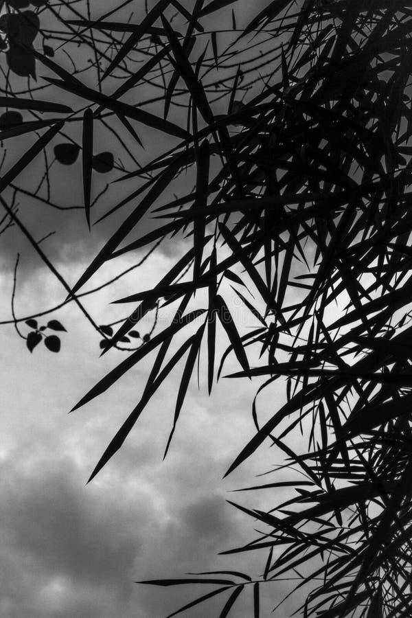Piante di bambù della siluetta in un giorno nuvoloso fotografie stock