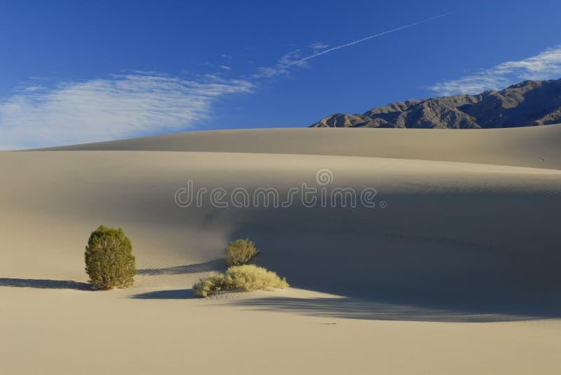 Piante di deserto sulle dune di sabbia fotografia stock
