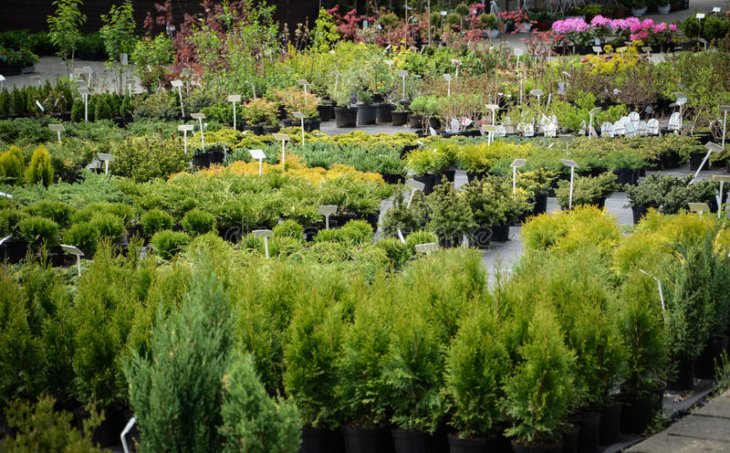 Download Piante di giardino fotografia stock. Immagine di fiore - 30825924