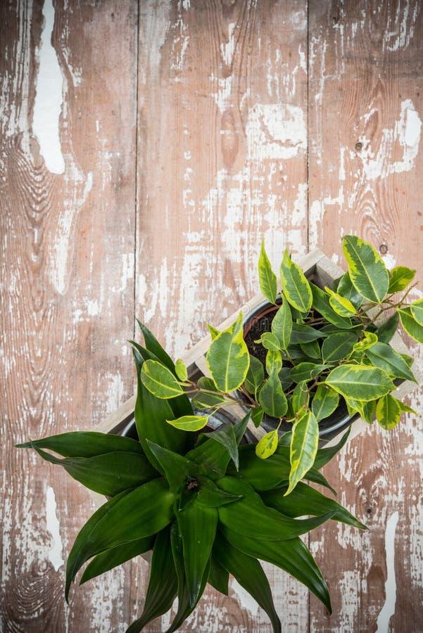 Piante di giardino domestiche verdi in scatola di legno immagine stock libera da diritti