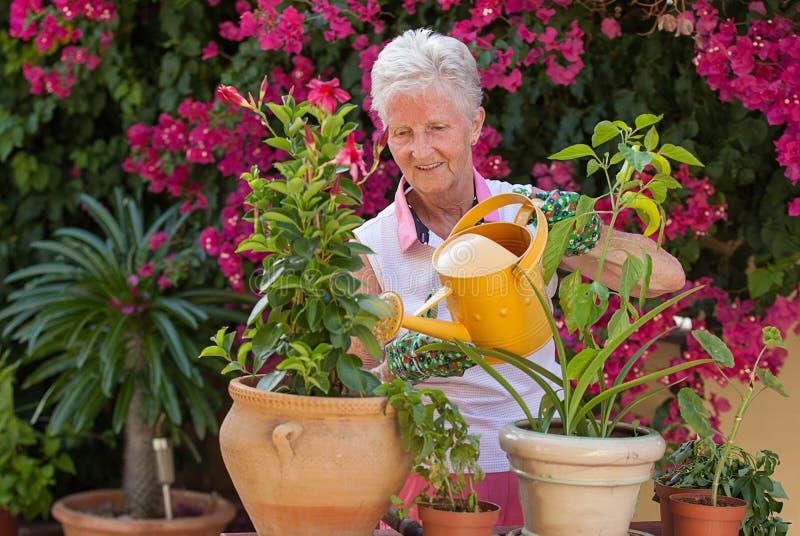 Piante di innaffiatura attive del giardiniere del pensionato immagine stock