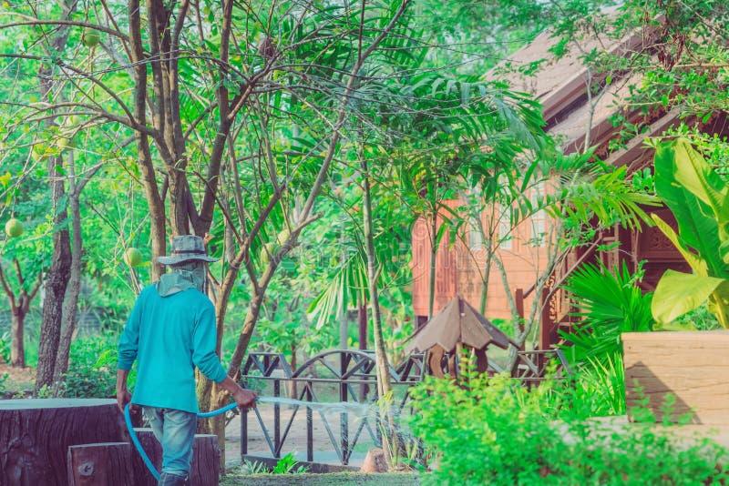 Piante di innaffiatura dell'uomo senior con il tubo flessibile e lavorare nel giardino immagine stock