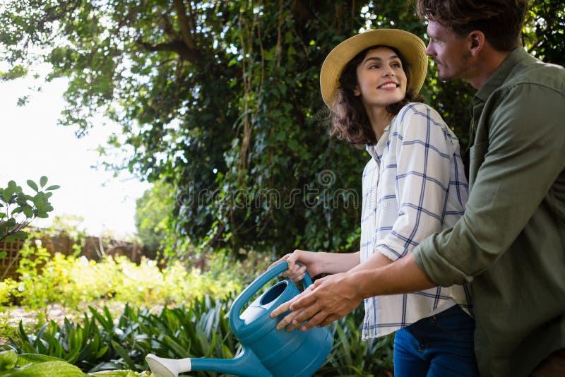 Piante di innaffiatura romantiche delle coppie con l'annaffiatoio in giardino fotografia stock libera da diritti
