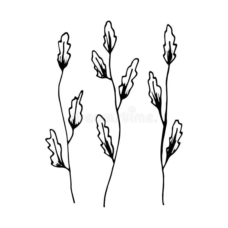 Piante di mare di schizzo dell'alga Vettore royalty illustrazione gratis
