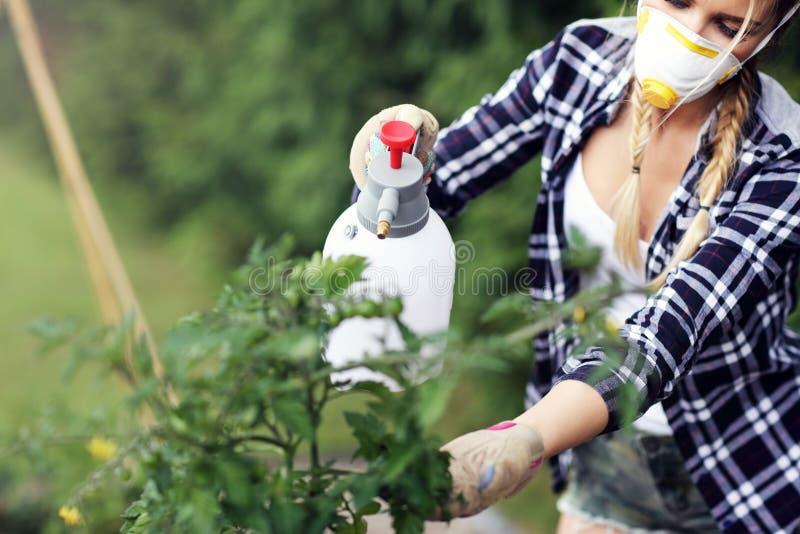 Piante di spruzzatura della donna adulta in giardino da proteggere dalle malattie fotografia stock