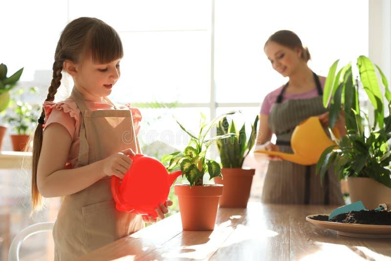 Piante domestiche d'innaffiatura della figlia e della madre alla tavola di legno immagine stock libera da diritti
