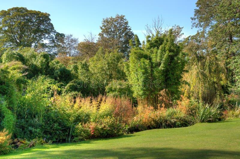 Piante e cespugli di giardino fotografia stock immagine for Cespugli giardino