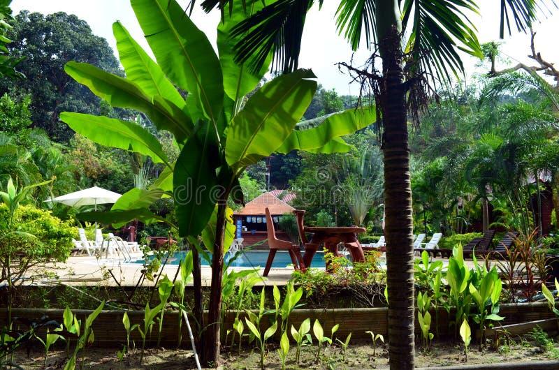 Piante e giungla ad una località di soggiorno in Tailandia immagini stock