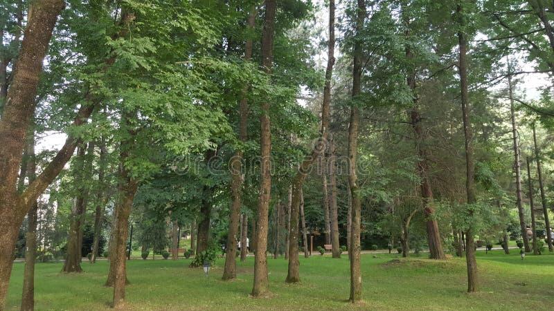 Piante e alberi immagini stock libere da diritti