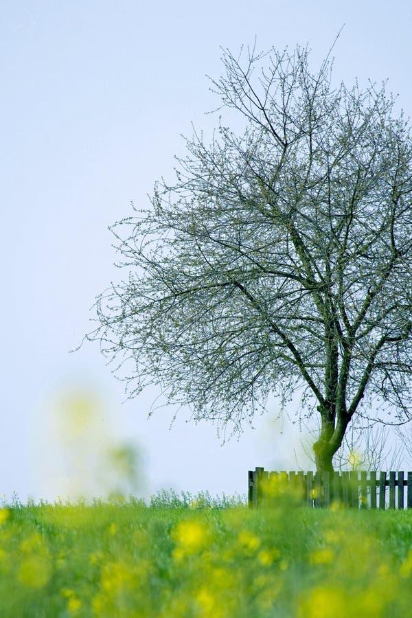 Piante ed albero della sorgente fotografia stock libera da diritti