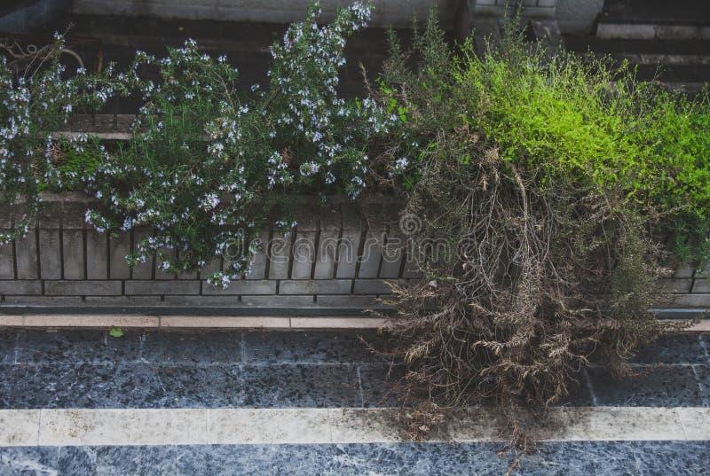 Piante ed erba in verdure saltate concrete fotografia stock