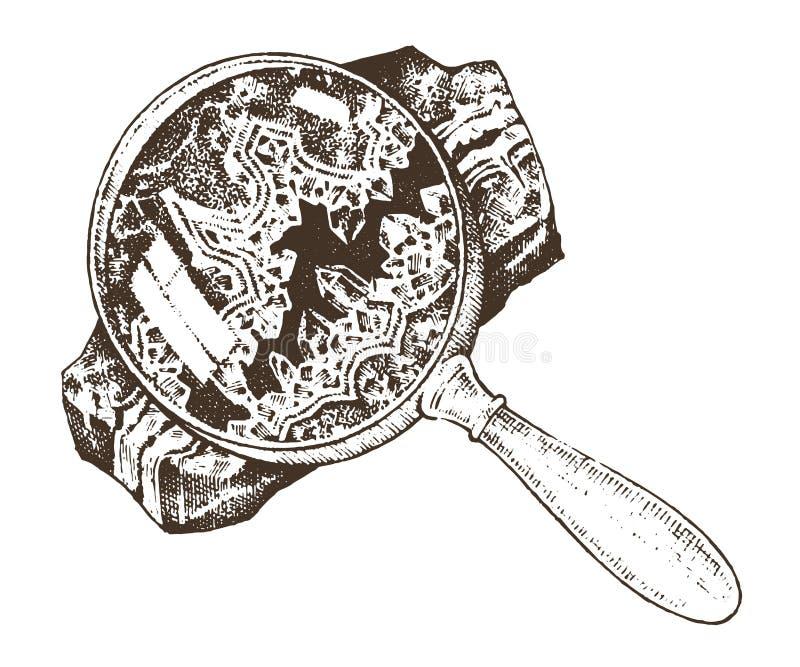 Piante fossilizzate con la lente, le pietre ed i minerali, illustrazione vettoriale
