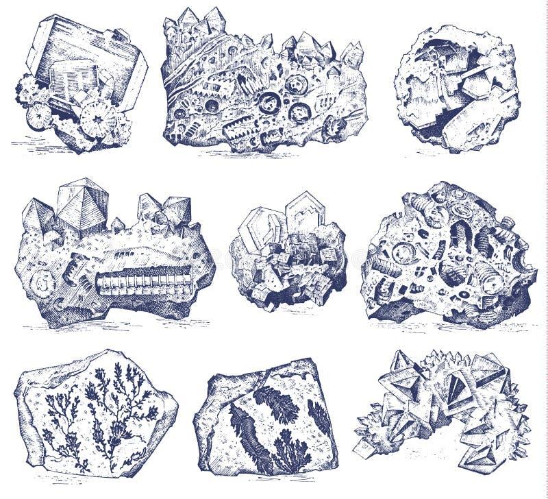 Piante fossilizzate, pietre e minerali, cristalli, animali preistorici, archeologia o paleontologia fossili del frammento illustrazione di stock