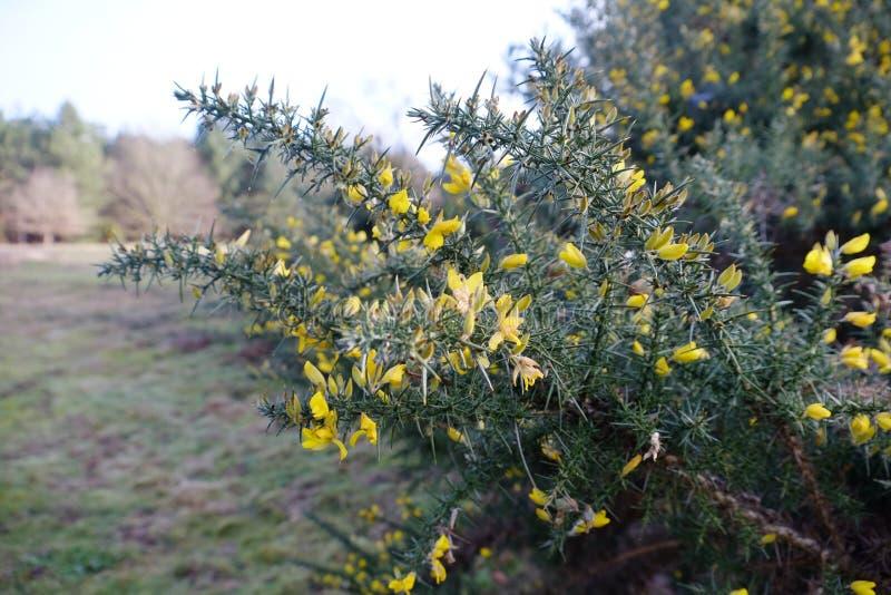 Piante gialle in più forrest fotografie stock libere da diritti