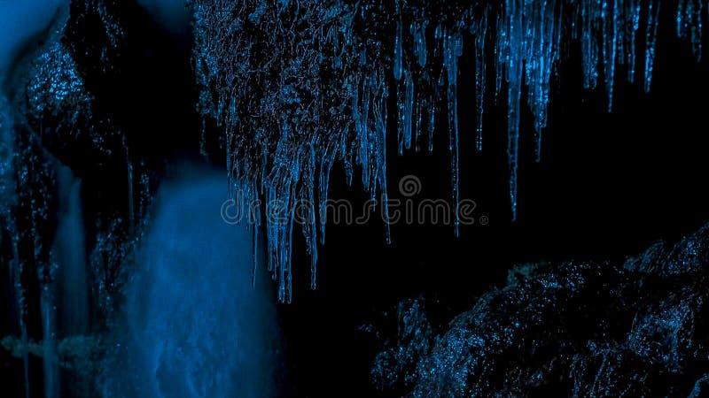 Piante in glassato in più dopo una notte di congelamento fotografia stock