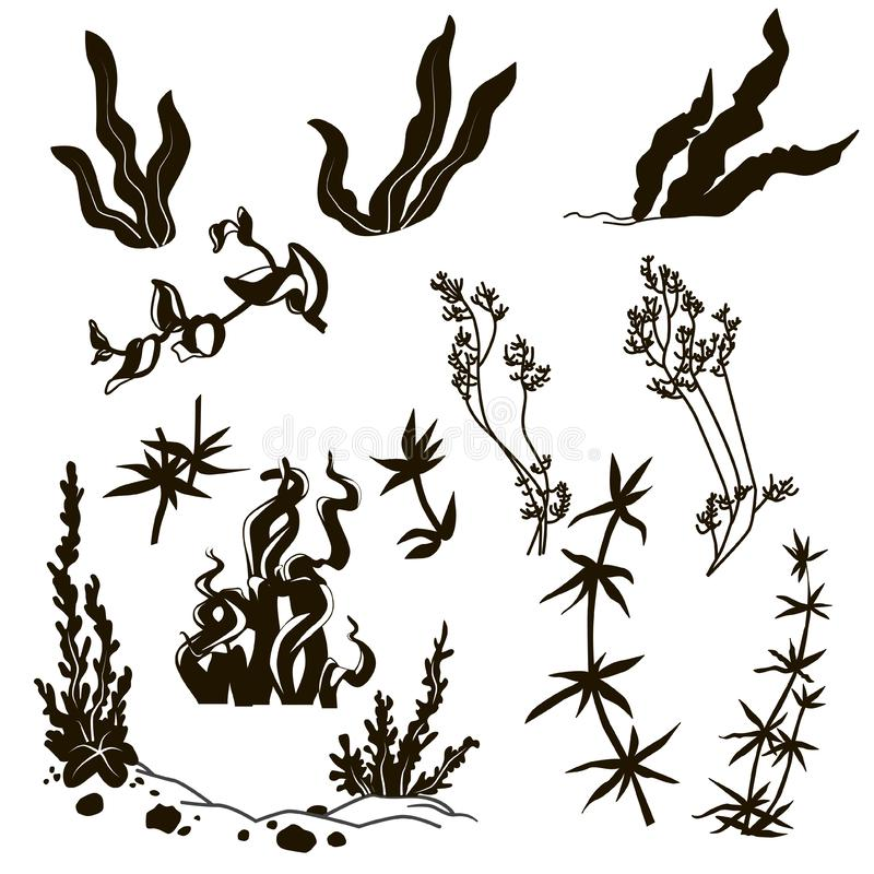 piante marine royalty illustrazione gratis