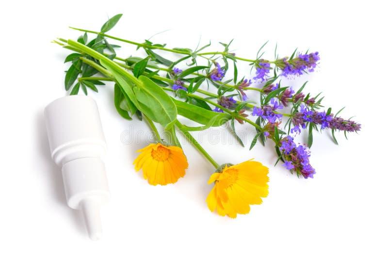 Piante medicinali calendula e issopo con lo spruzzo di naso Isolato su bianco immagini stock libere da diritti