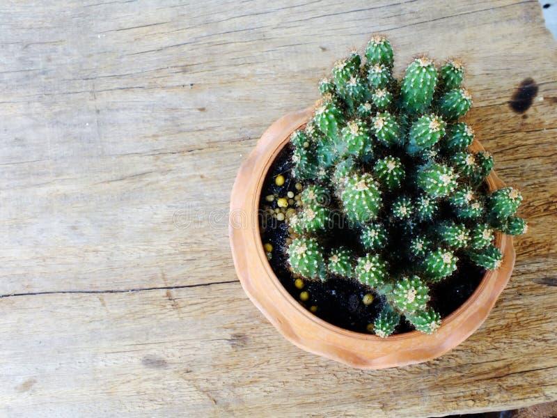 Piante naturali del cactus di natura morta su fondo di legno strutturato fotografia stock libera da diritti