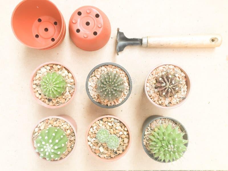 Piante naturali del cactus di varietà di natura morta su colore d'annata di Brown fotografie stock libere da diritti