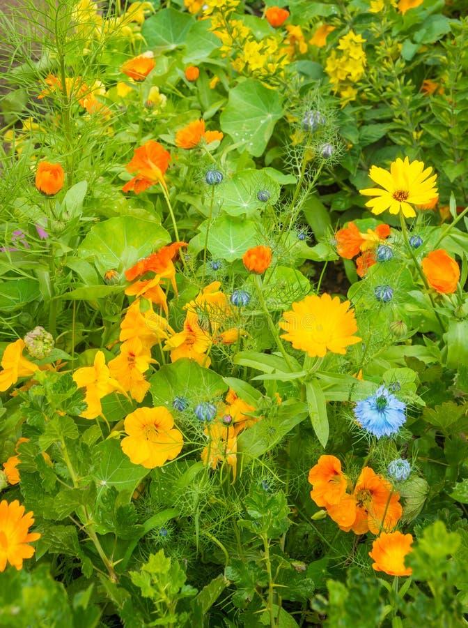 Piante nel giardino del cottage fotografia stock